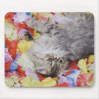 Persian Cat, Felis catus, Brown Tabby, Kitten, 2 Mouse Pad