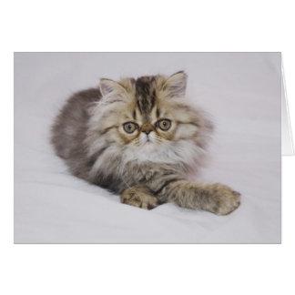 Persian Cat, Felis catus, Brown Tabby, Kitten, Card