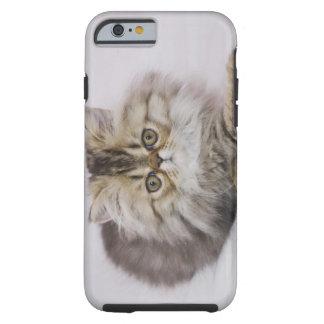 Persian Cat, Felis catus, Brown Tabby, Kitten, Tough iPhone 6 Case