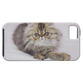 Persian Cat, Felis catus, Brown Tabby, Kitten, iPhone 5 Covers