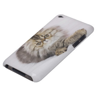 Persian Cat, Felis catus, Brown Tabby, Kitten, iPod Touch Case-Mate Case