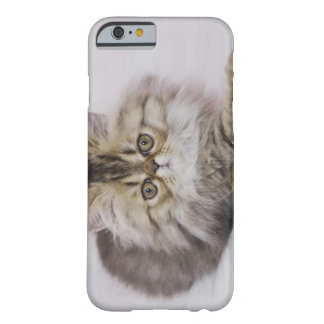Persian Cat, Felis catus, Brown Tabby, Kitten, Barely There iPhone 6 Case