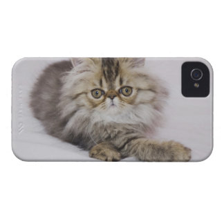 Persian Cat, Felis catus, Brown Tabby, Kitten, iPhone 4 Covers