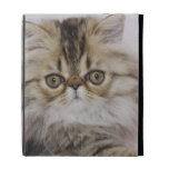 Persian Cat, Felis catus, Brown Tabby, Kitten, iPad Folio Cases