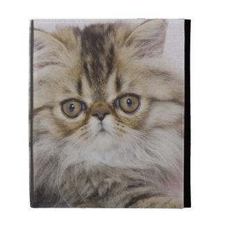 Persian Cat, Felis catus, Brown Tabby, Kitten, iPad Folio Cases