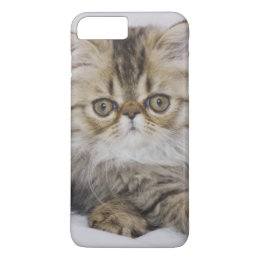 Persian Cat, Felis catus, Brown Tabby, Kitten, iPhone 8 Plus/7 Plus Case