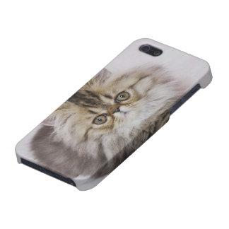 Persian Cat, Felis catus, Brown Tabby, Kitten, iPhone 5 Cover