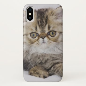 USA Themed Persian Cat, Felis catus, Brown Tabby, Kitten, iPhone X Case