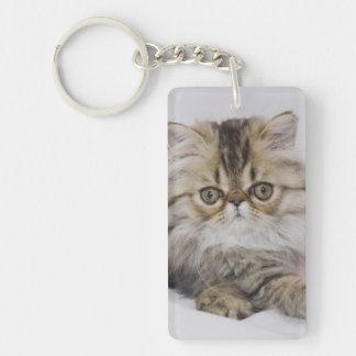 Persian Cat, Felis catus, Brown Tabby, Kitten, Key Chain