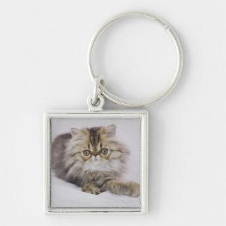 Persian Cat, Felis catus, Brown Tabby, Kitten, Key Chains