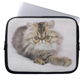 Persian Cat, Felis catus, Brown Tabby, Kitten, Laptop Sleeve