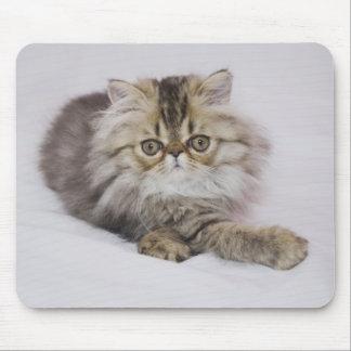 Persian Cat, Felis catus, Brown Tabby, Kitten, Mouse Pad