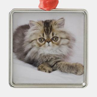 Persian Cat, Felis catus, Brown Tabby, Kitten, Christmas Tree Ornament