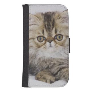 Persian Cat, Felis catus, Brown Tabby, Kitten, Phone Wallet