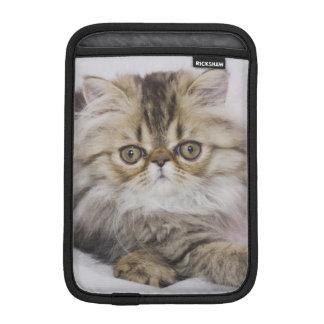 Persian Cat, Felis catus, Brown Tabby, Kitten, Sleeve For iPad Mini