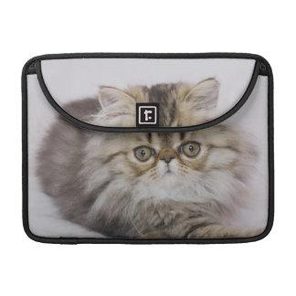 Persian Cat, Felis catus, Brown Tabby, Kitten, Sleeve For MacBook Pro