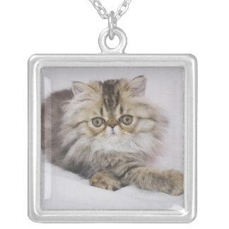 Persian Cat, Felis catus, Brown Tabby, Kitten, Square Pendant Necklace