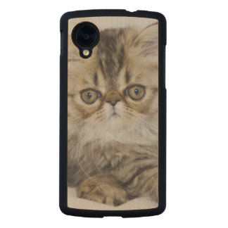 Persian Cat, Felis catus, Brown Tabby, Kitten, Carved® Maple Nexus 5 Case