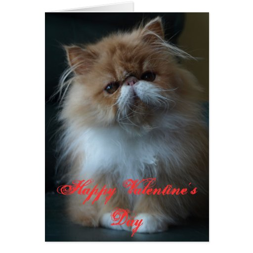 Persian Cat Happy Valentine's Day Greeting Card