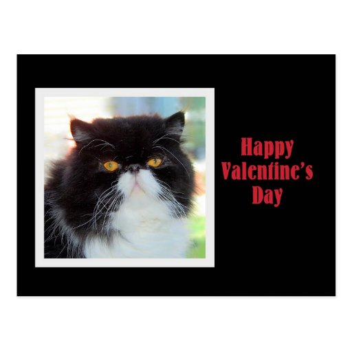 Persian Cat Happy Valentine's Day Postcard