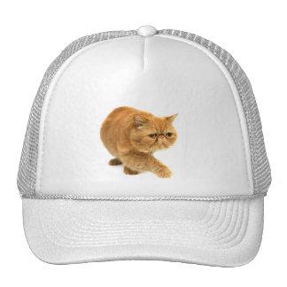 Persian cat trucker hats