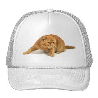 Persian cat hat