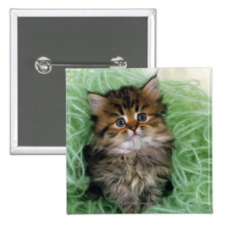 Persian cat; is one of the oldest breeds of cat. 2 inch square button