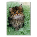Persian cat; is one of the oldest breeds of cat. greeting card