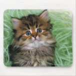 Persian cat; is one of the oldest breeds of cat. mousepads