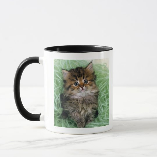 Persian cat; is one of the oldest breeds of cat. mug