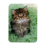 Persian cat; is one of the oldest breeds of cat. rectangular photo magnet
