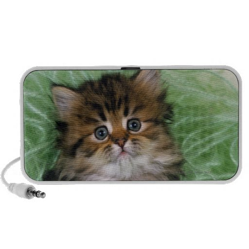 Persian cat; is one of the oldest breeds of cat. notebook speaker