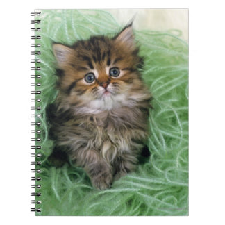 Persian cat; is one of the oldest breeds of cat. spiral notebook