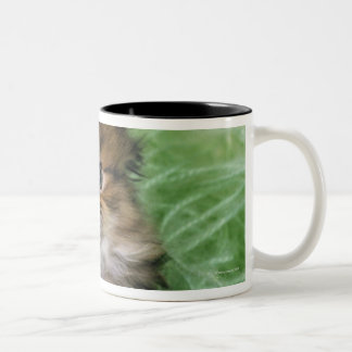 Persian cat; is one of the oldest breeds of cat. Two-Tone coffee mug
