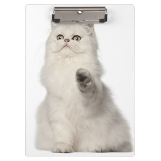 Persian cat sitting clipboard