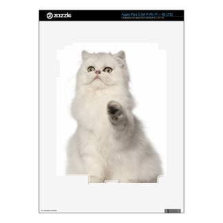 Persian cat sitting iPad 3 skin