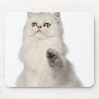 Persian cat sitting mouse pad