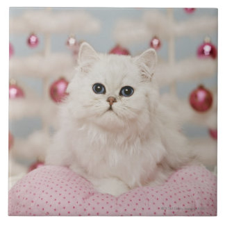 Persian cat sitting on pink pillow ceramic tile
