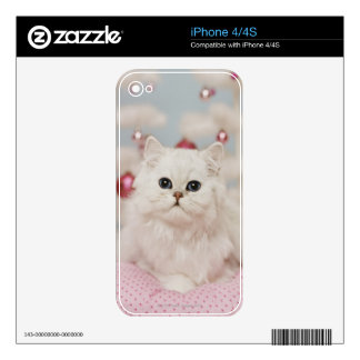 Persian cat sitting on pink pillow skin for the iPhone 4