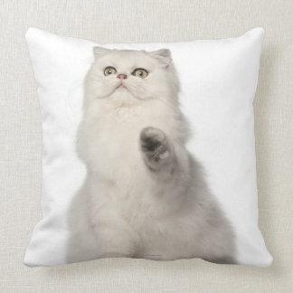 Persian cat sitting pillow