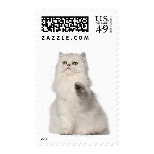 Persian cat sitting postage