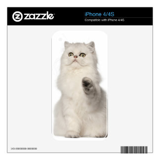 Persian cat sitting skins for iPhone 4