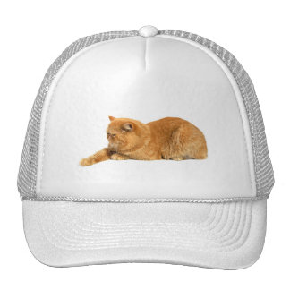 Persian cat trucker hat