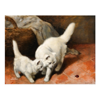 Persian Cat Vintage Art Postcard