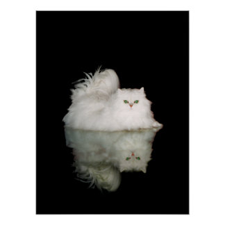 Persian Cat with Jade Green Eyes Poster