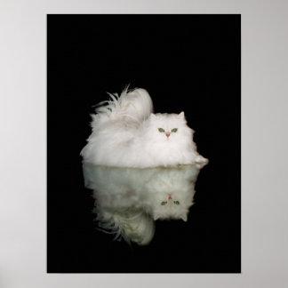 Persian Cat with Jade Green Eyes Print