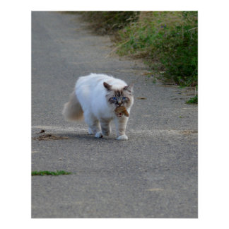 Persian cat with mouse in the muzzle, on road, poster