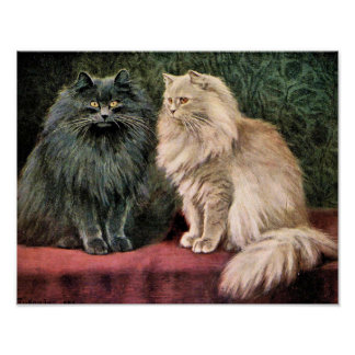 Persian Cats - Blue and Cream Poster