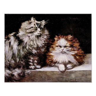Persian Cats, Silver Tabby and Orange and White Poster