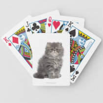Persian Kitten (2 months old) sitting Bicycle Playing Cards